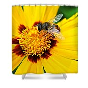 Drone Bee Shower Curtain