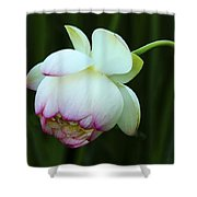 Drooping Lotus Shower Curtain