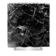 Droplets On The Web Bw Shower Curtain
