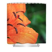 Droplets On Tiger Lily Shower Curtain
