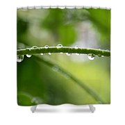 Drops In Line Shower Curtain