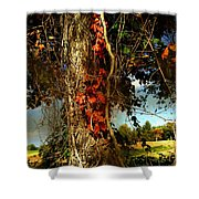 Druid Oak Shower Curtain