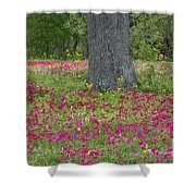 Drummonds Phlox And Crown Tickweed Central Texas Shower Curtain