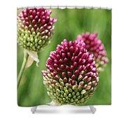 Drumstick Allium Shower Curtain