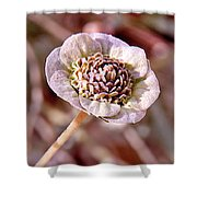 Dry Bloom Shower Curtain