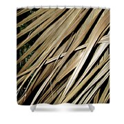 Dry Palm Leaves Shower Curtain