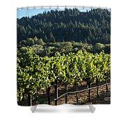 Dry Creek Road Vineyard Shower Curtain