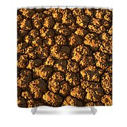 Dry Lakebed, Nevada Shower Curtain