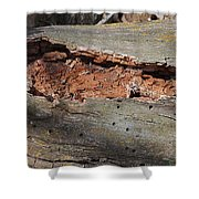 Dry Rotting Tree Shower Curtain