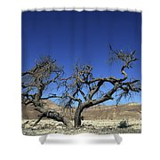 Dry Solitary Tree  Shower Curtain