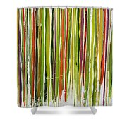 D.s. Color Band Skinny Shower Curtain