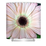 Dsc0001d Shower Curtain