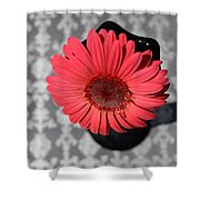 Dsc0064d Shower Curtain