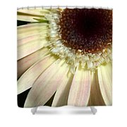Dsc204d1-002 Shower Curtain