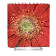 Dsc286-003 Shower Curtain
