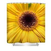 Dsc332d1 Shower Curtain