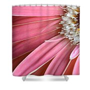Dsc406d-004 Shower Curtain