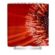 Dsc709d-002 Shower Curtain