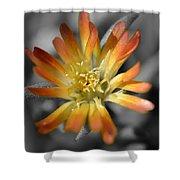 Dsc798d-001 Shower Curtain