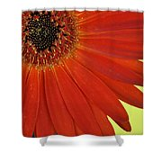 Dsc883d-002 Shower Curtain