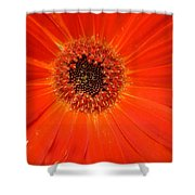Dscn2633d Shower Curtain