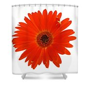 Dscn2651d2 Shower Curtain