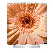 Dscn3360a1 Shower Curtain
