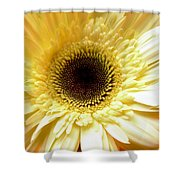 Dscn7673112 Shower Curtain