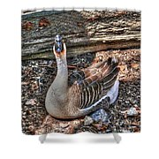 Gray Goose 1 Shower Curtain