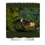 Duck And Fish Shower Curtain