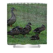 Duck Assembly Shower Curtain