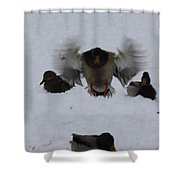 Duck Crash Landing Shower Curtain