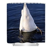 Duck Diving Shower Curtain