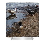Duck Duck Goose Shower Curtain