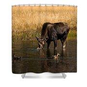 Duck Duck Moose Shower Curtain