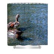 Duck Duck Shower Curtain