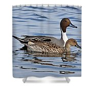 Duck Duo Shower Curtain