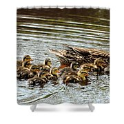 Duck Family Shower Curtain
