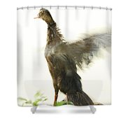 Duck Flapping Wings Shower Curtain