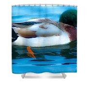 Duck Glide Shower Curtain