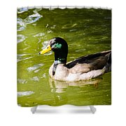 Duck In The Park Shower Curtain