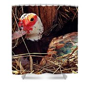 Duck In The Roost Shower Curtain