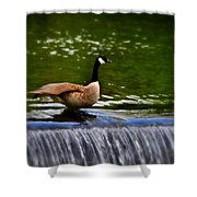 Duck On The River Wye Waterfall - In Bakewell Peak District - England Shower Curtain