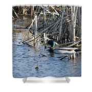 Duck Paddle Shower Curtain