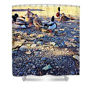 Duck Parade On The Beach Shower Curtain