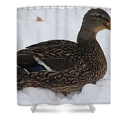 Duck Playing In The Snow Shower Curtain