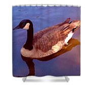 Duck Swimming Shower Curtain