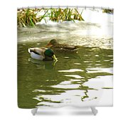 Duck Swimming In A Frozen Lake Shower Curtain
