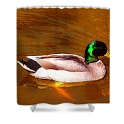 Duck Swimming On Golden Pond Shower Curtain