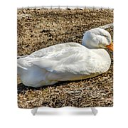Duck Taking A Nap Shower Curtain